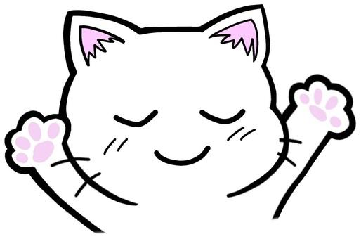 深呼吸的貓體操舒適