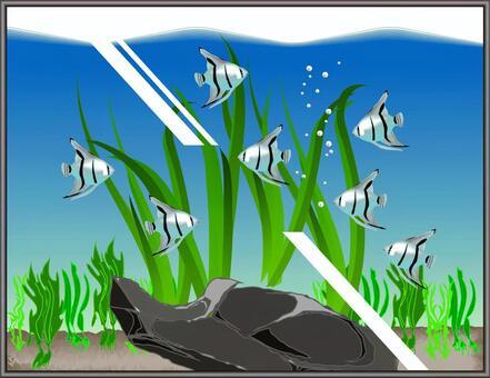 藍天使水族館魚魚繁殖水族館