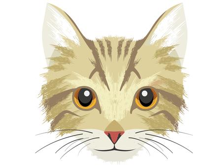 Cat C Kijitora