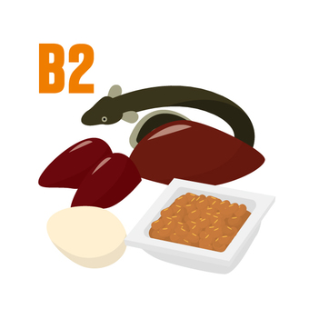 維生素B2