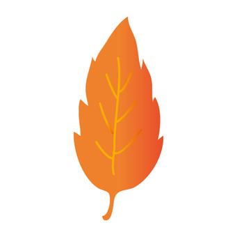 낙엽 (오렌지)