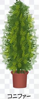 針葉樹種植種植灌木