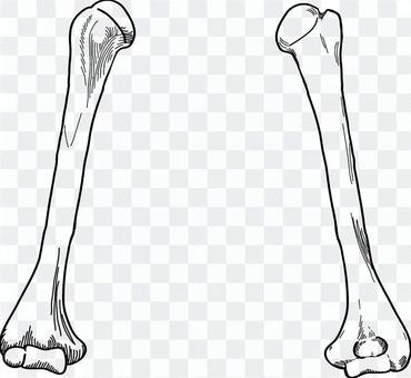 肱骨前後套