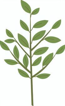 【植物】Sak