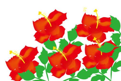 一朵紅花在夏天的插圖芙蓉