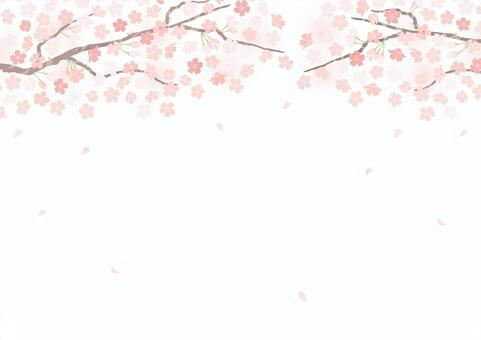 Spring cherry blossom background with a gentle atmosphere