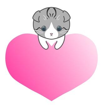 帽子貓(4)