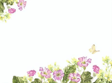 信背景 -  Nanohana和報春花