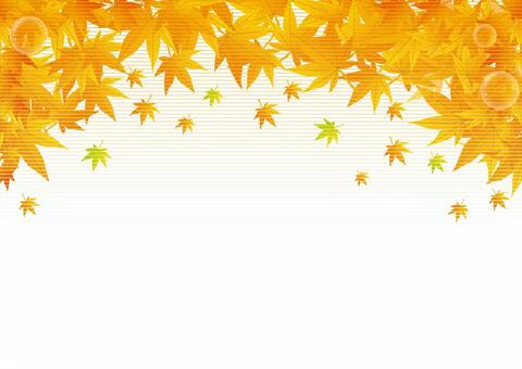 For autumn leaves background