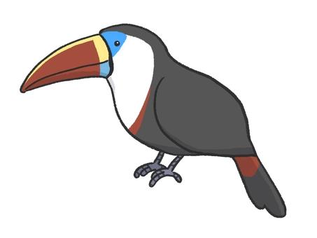 白喉巨嘴鳥