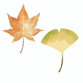 秋葉和銀杏樹葉子