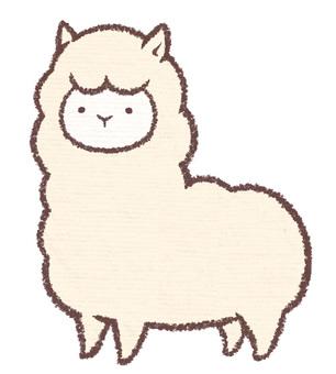 Momoko羊駝