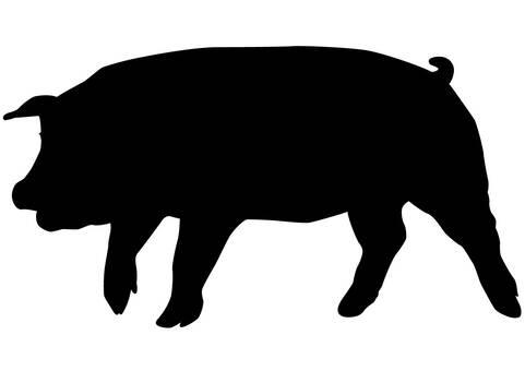Pig, Silhouette