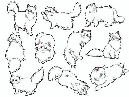 10只波斯貓