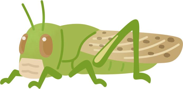 Desert locust (adult / lonely phase)