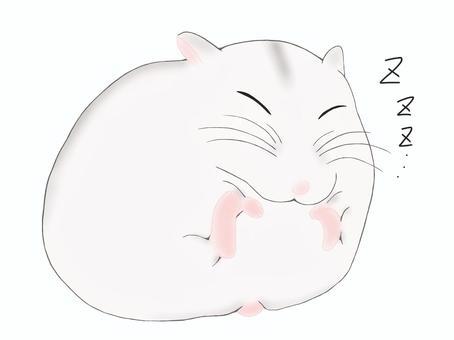 昏昏欲睡的倉鼠(白色)