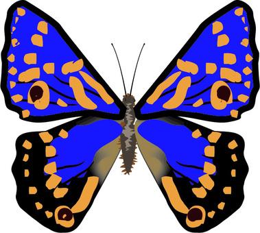 コムラサキ タテハチョウ科 昆虫