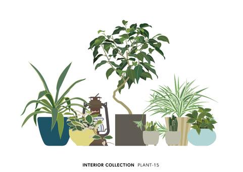 PLANT-15