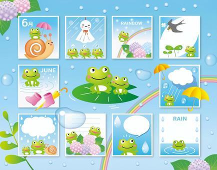 各種各樣的青蛙在雨季