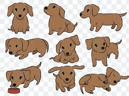 臘腸犬(棕色)姿勢集